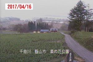 nanohana20170416.jpg
